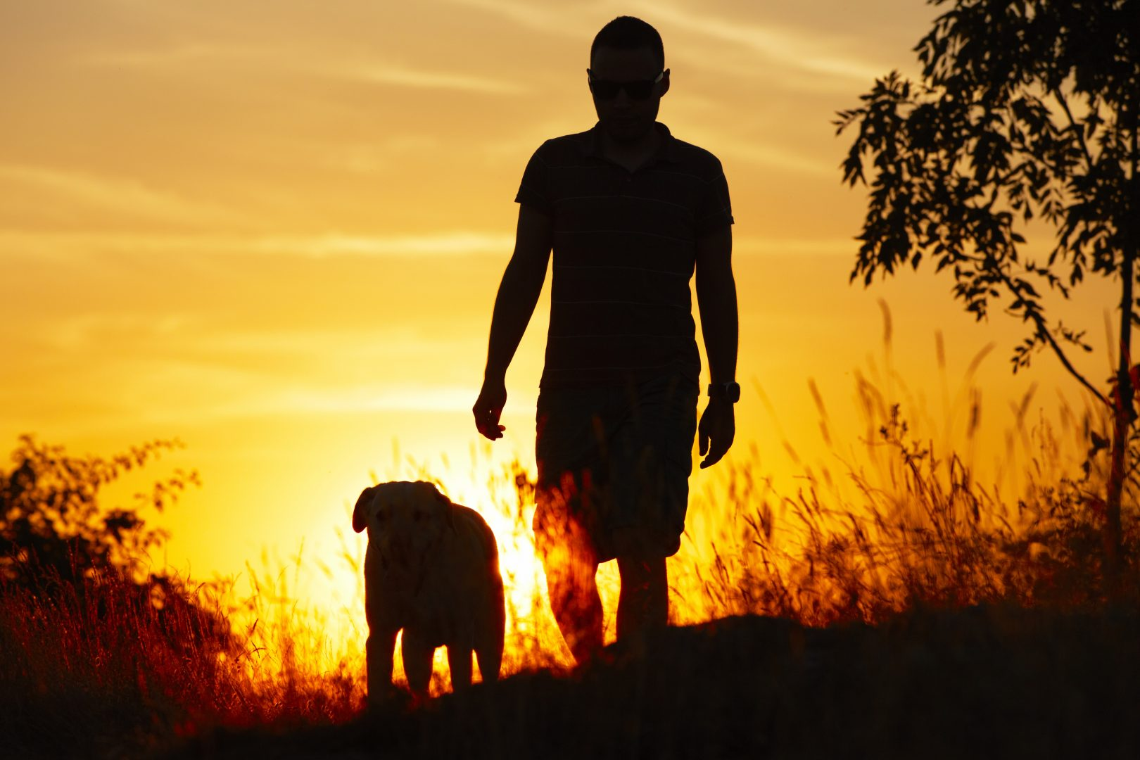 man walking with dog into sunset