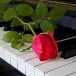 single red rose on piano keys