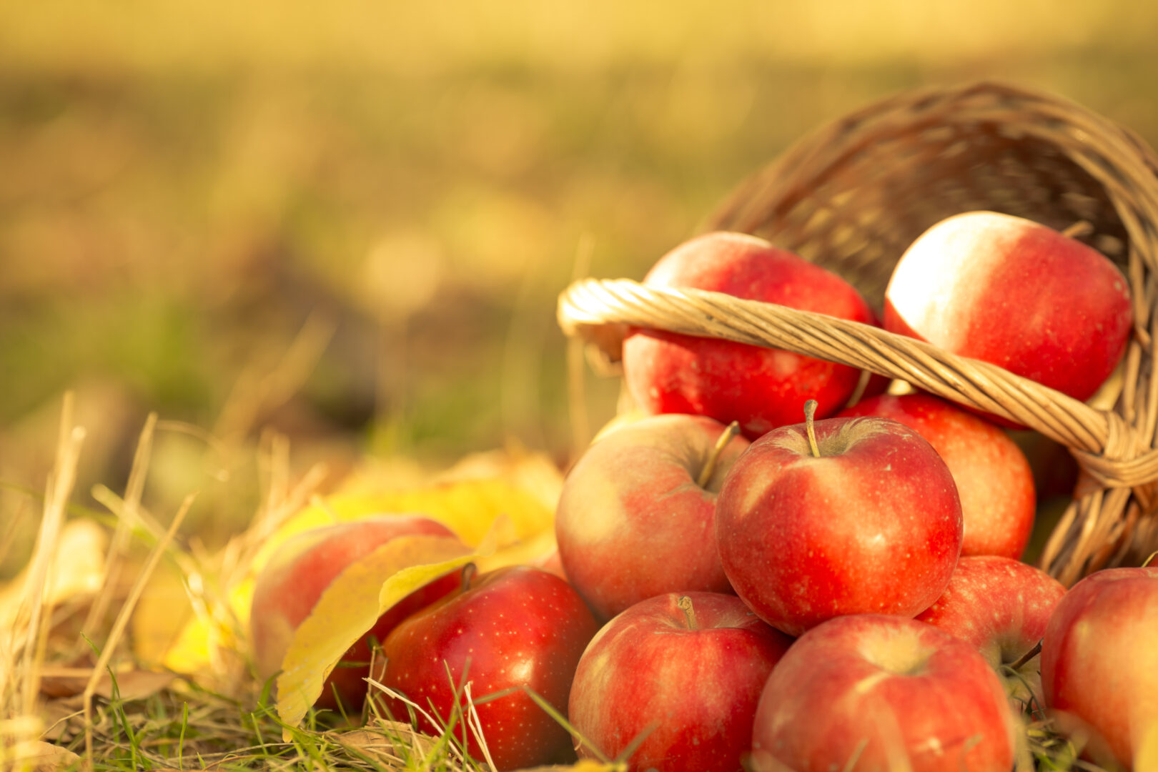 tipped over basket of apples